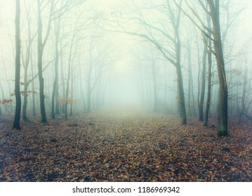 Mystic foggy forest alley with bare trees and fallen leaves