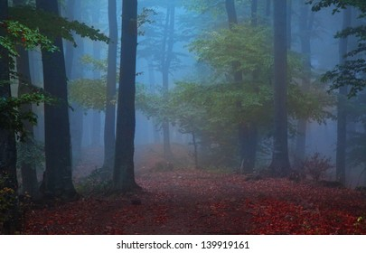 Mystic foggy forest in bright colors