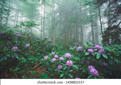 Flowers Trees Nature Scenes Images Stock Photos Vectors