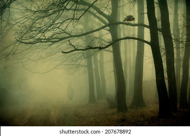Mystic forest with a crow and man silhouette