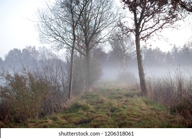 mystic landscape with fog in the moorlands with nearly leafless trees on a late november afternoon