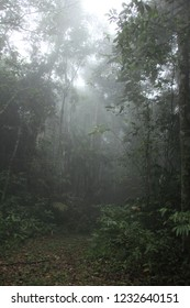 Mystic landscape with palms in the jungle Palmichal forest, Venezuela