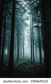 Mystic moody forest view with heavy fog and dark mysterious vibes. Foggy and misty nature scenery of a pine forest. Harz National Park in Germany