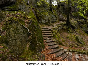 Mystic and scary stone steps in forest. Trees, dark, root, forest. Path from a castle.