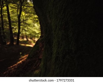 Mystic scene with a dark green moss covered tree in the shadow of a dimly lit forest with blurred lighter opening of the wood in the background