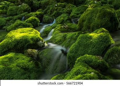 Mystic spring of mountain stream