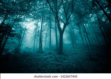 Mystic turquoise colored foggy fairytale forest trees landscape.