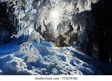 mystic winter forest - bright sunshine through branches with hoarfrost
