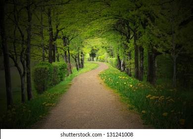 mystical alley through dark beech forest with lighting, fairy landscape
