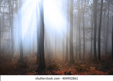 Mystical appearance of light in foggy forest