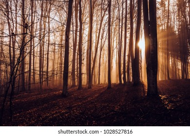 Mystical autumn forest.  Sunbeams between the trees.