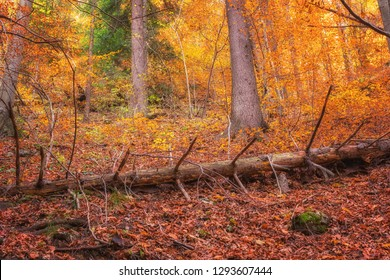 Mystical autumn sunny forest with falling tree trunk, amazing nature, natural travel outdoor background - Shutterstock ID 1293607444