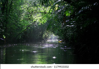 Mystical and beautiful jungle river / stream through green rainforest canopy. photographed in French Guiana