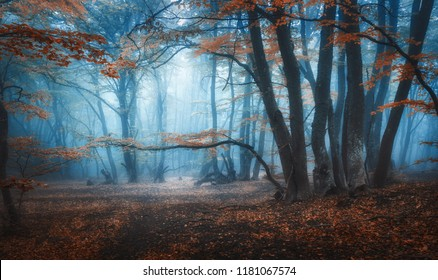 Mystical dark autumn forest with trail in blue fog. Landscape with enchanted trees with orange leaves on the branches. Scenery with path in dreamy old foggy forest. Fall colors. Nature. Vintage toning