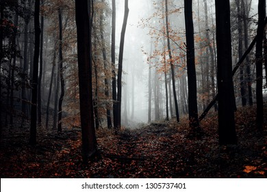 Mystical dark forest