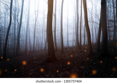 Mystical dark forest with fireflies