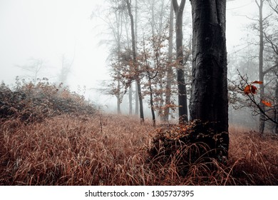 Mystical dark forest with fog clearing