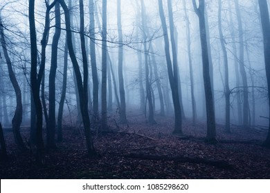 Mystical dark forest impression