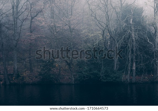 Mystical dark forest on a lake with fog
