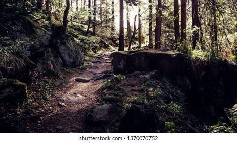 Mystical dark trail leads through a forest
