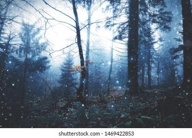 Mystical foggy dark forest landscape with blurry fireflies.
