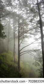 Mystical foggy forest