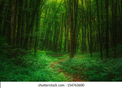 Mystical forest.