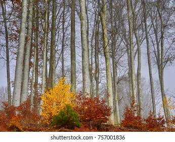 Mystical forest in the fall and its magic that wins your soul.