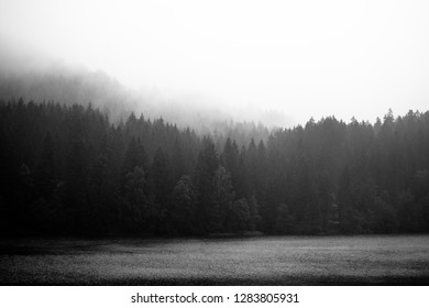 Mystical forest landscape with fog, black and white
