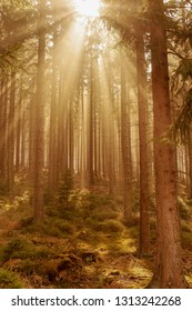 Mystical forest mood in the sunlight