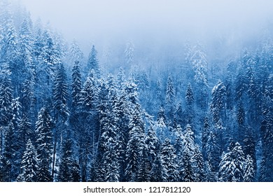 mystical forest in the mountains covered with snow and fog on top of the mountain
