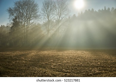 Mystical forest with rays of sun light over field and through trees of forest