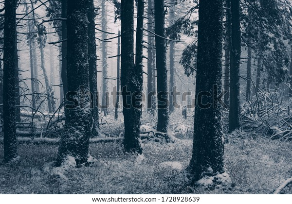 Mystical frosty forest in the Harz National Park