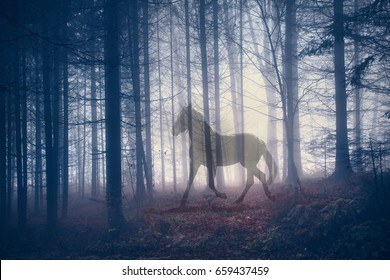 Mystical horse in the fantasy dark fairy foggy forest landscape. Abstract unicorn in the magical woodland. Double exposure technique used.