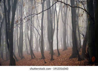mystical landscape in the beech forest with few leaves shrouded in dense fog in the cold season