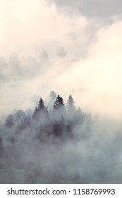 Mystical landscape with firs and trees. Designer vintage stylization colors.