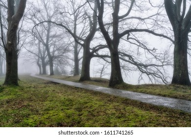 Mystical landscape. Thick fog in the park.