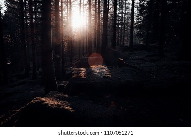 Mystical light in the early Morning in the forest