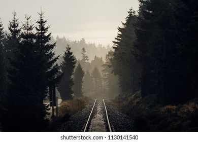 Mystical lighting situation, and railway tracks lead through the forest