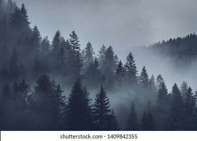 mystical mood over the forest - Shutterstock ID 1409842355