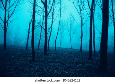 Mystical Morning in the forest with a fog