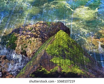 mystical, moss-covered stones in close-up. Before that, the shadowy representation of a jungle