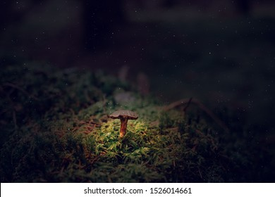 Mystical mushrooms grow in the dark forest. Fall Season