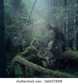 Mystical old forest with fallen trees