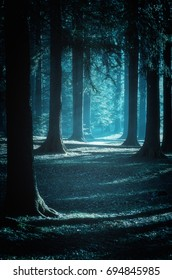 Mystical path trough the woods at moonlight