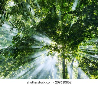 Mystical rays of sunlight through the trees from the smoke of campfire