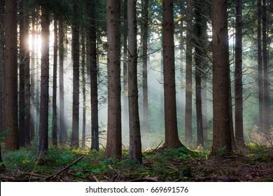 Mystical sunbeams shining through the forest