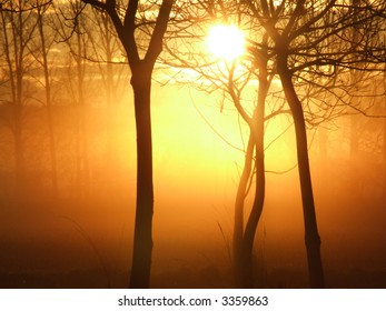 Mystical sunrise in a forest on a misty morning
