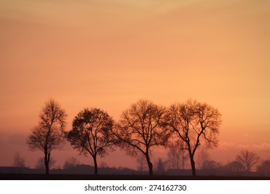 mystical sunrise in a forest on morning, nature series