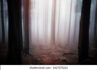 Mystical surreal forest Impression with fog